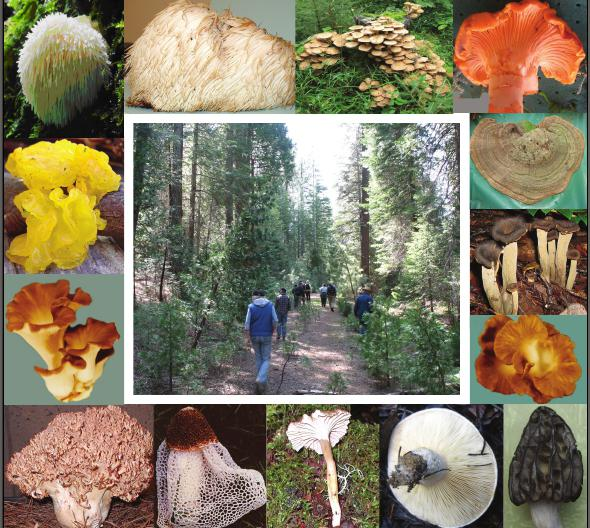 classification of fungi by edibility